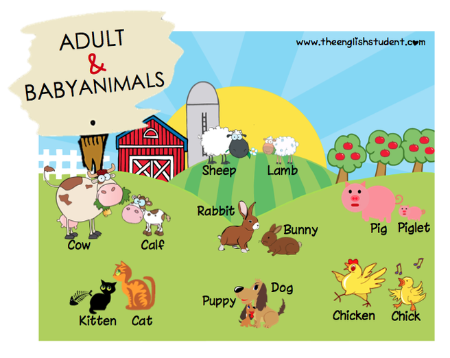 The English Student, www.theenglishstudent.com, ESL blog, adult and baby animals, baby animal names, baby sheep, baby cow, baby rabbit, ESL animals, ESL vocabulary, farm animals, animals clipart